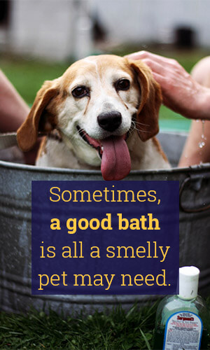 A Good Bath is all a Smelly Pet May Need Retriever in tub