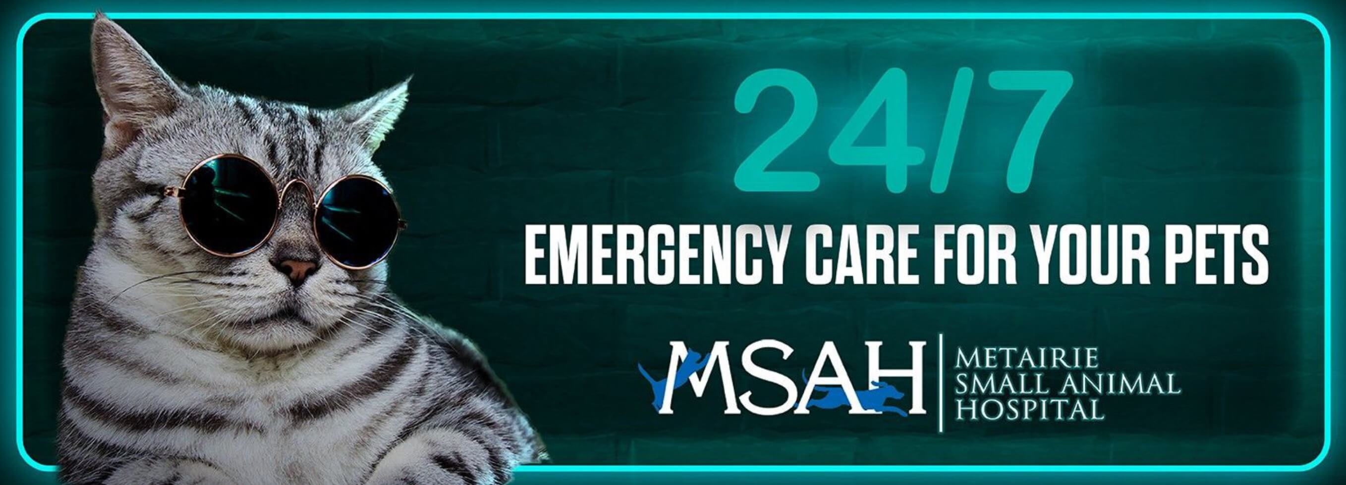 Emergency Vet Care