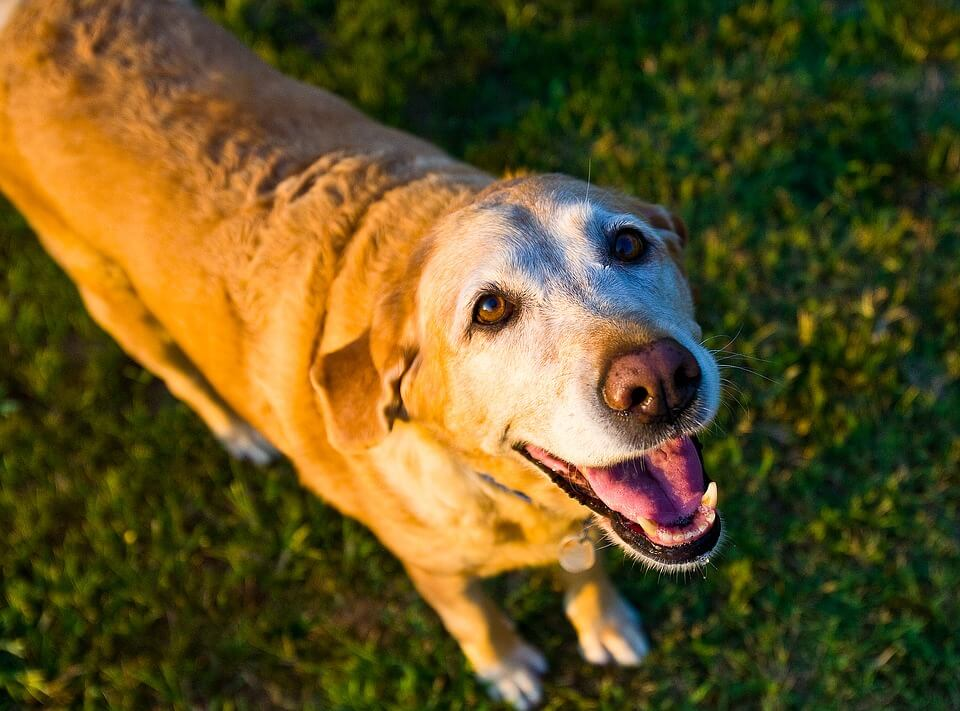 Exercise for senior dogs