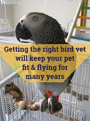 Getting the Right Bird Vet Will Keep Your Pet Fit and Flying For Many Years