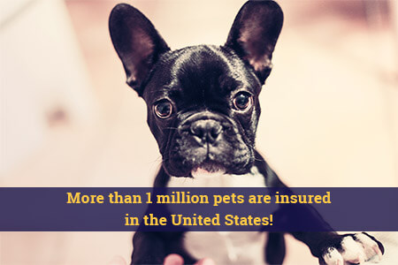 More than 1 million pets are insured in the United States