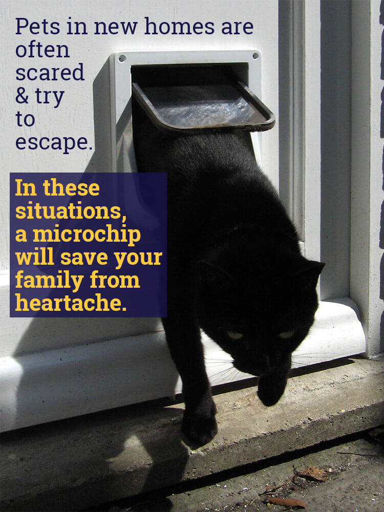 Pets in New Homes May Try to Escape so Microchip Them - Black Cat Leaving Through Kitty Door