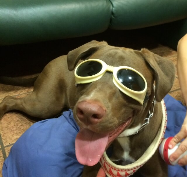 Laser Therapy For Dogs Msah Metairie Small Animal