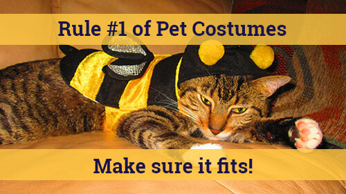Rule 1 of Pet Costumes Make Sure it Fits