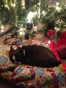 Austin is safely snuggled in his bed under his tree.