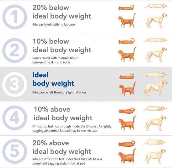 Weight Loss And Your Pet Msah Metairie Small Animal