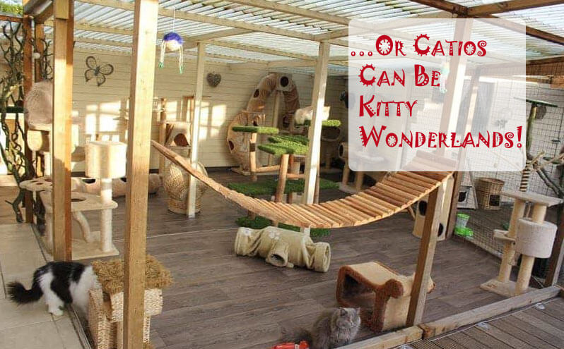 Or Catios Can Be Kitty Wonderlands
