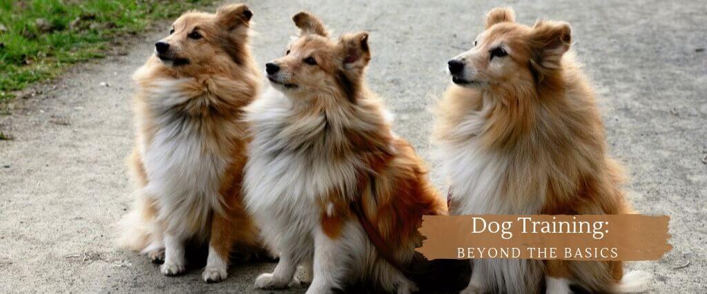 Beyond Basic Dog Training Msah Metairie Small Animal
