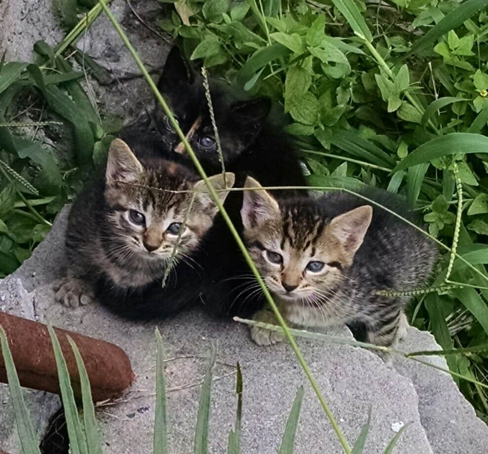 When Do Feral Mother Cats Leave Their Kittens