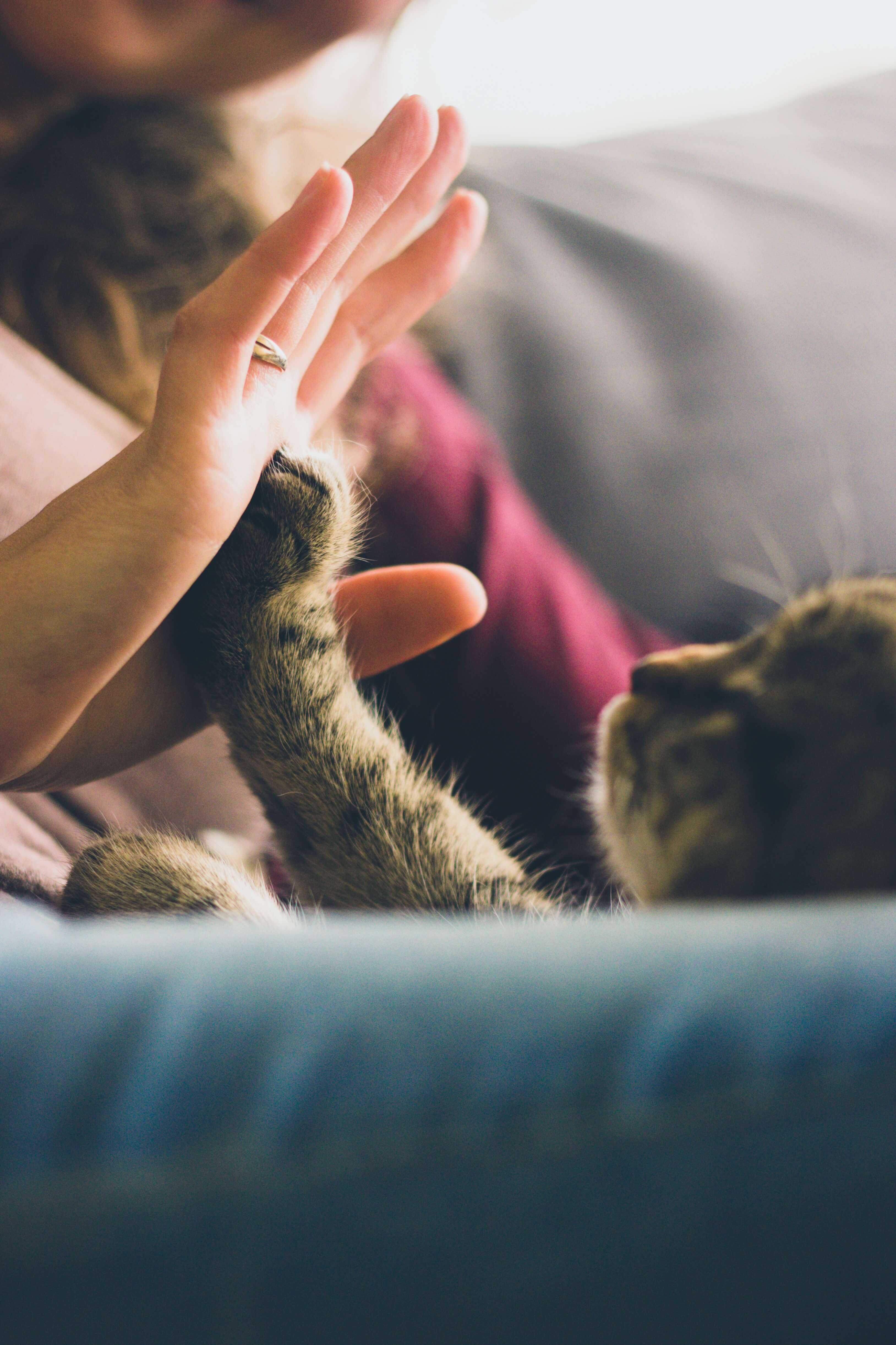Training Your Cat to Scratch Appropriately | MSAH - Metairie Small ...