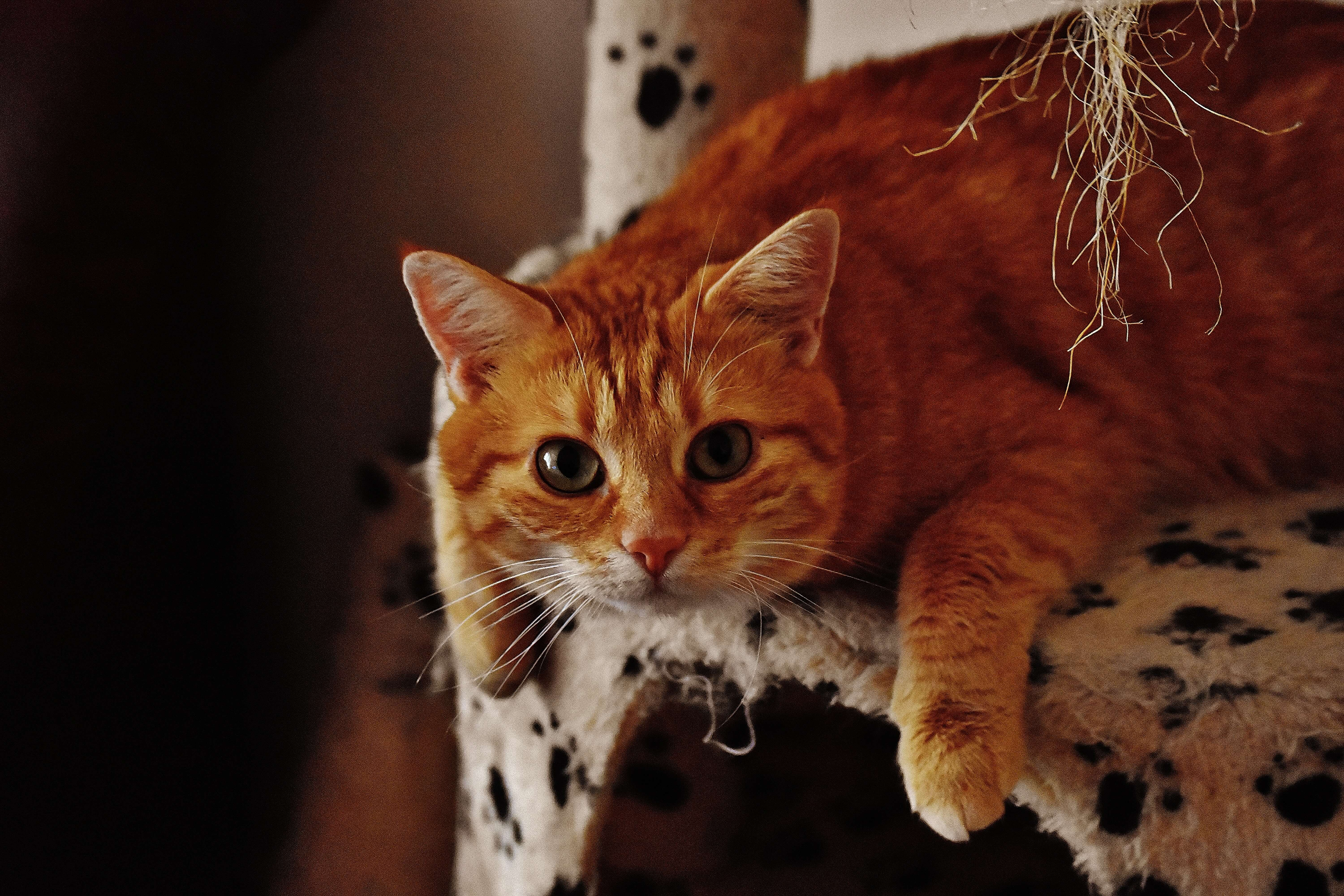 """how to help your """"fluffy"""" cat lose weight 