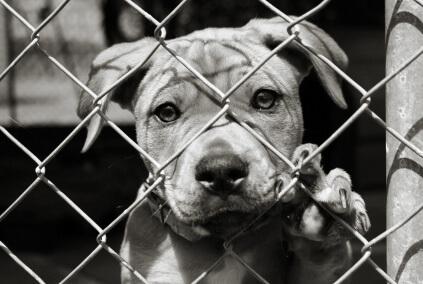 Pet Adoption Msah Metairie Small