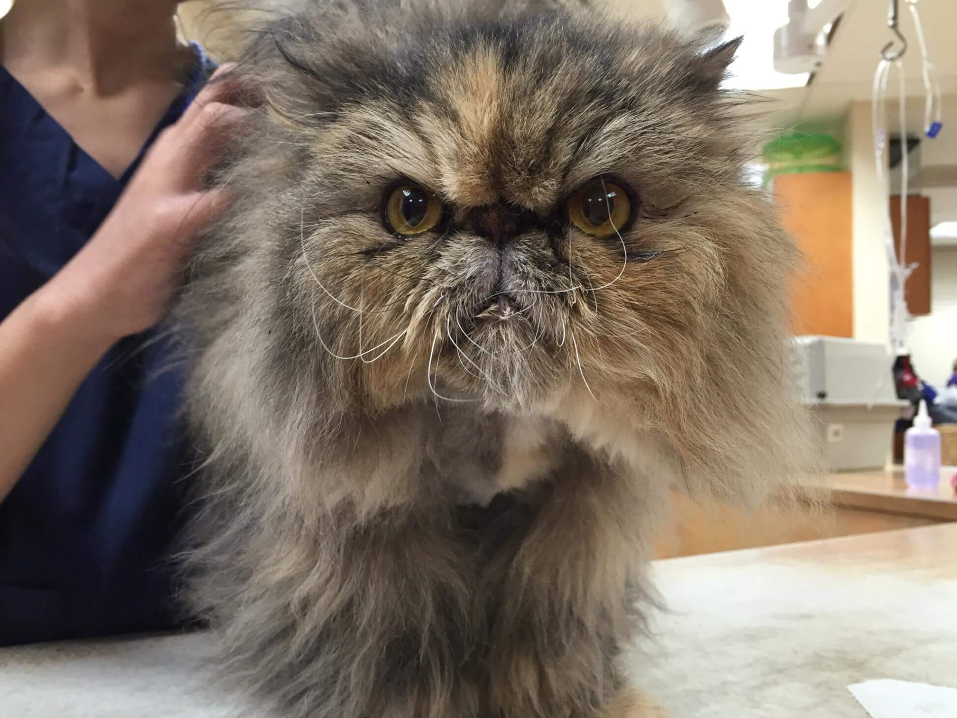 Sheeba the cat visits the vet