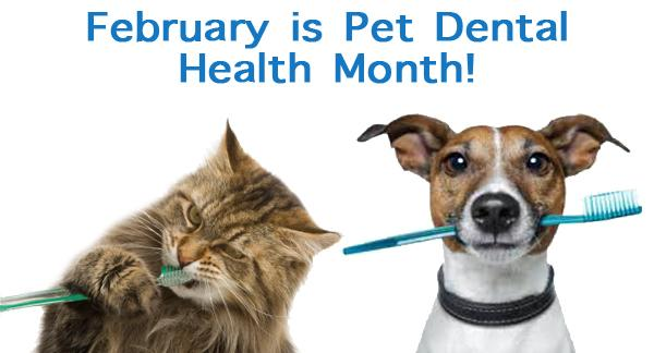 The Costs of Dog and Cat Dental Care | MSAH - Metairie ...