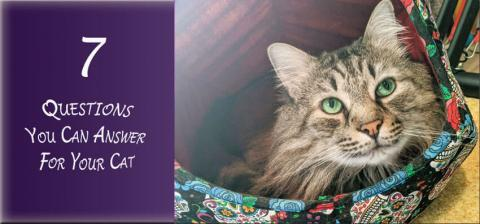 7 Questions You Can Answer for your cat