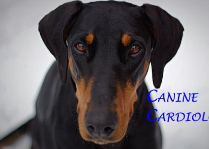 Canine Cardiology Blog Header