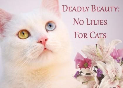 Deadly Beauty: No Lilies for Cats