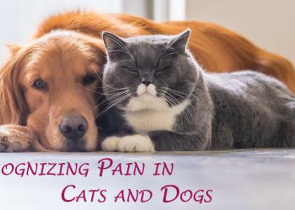 Recognizing Pain in Cats and Dogs