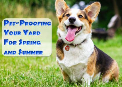 Pet-proofing your yard for spring and summer