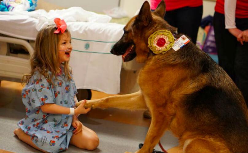 Therapy Dog Gsd Fea Jpg Msah Metairie Small Animal