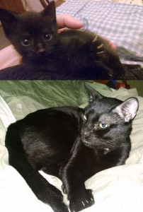 Zeke from kitten to adult.